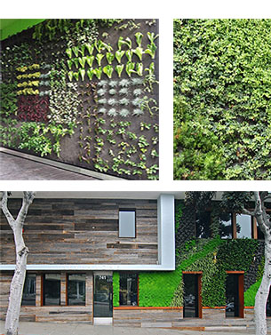 Living Walls Projects